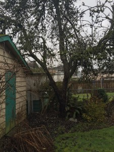 Non-producing diseased fruit tree