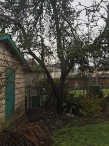 Non-producing diseased fruit tree